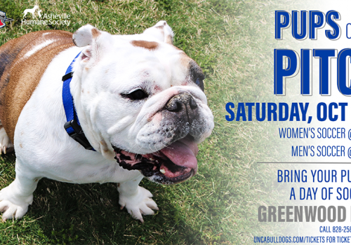 Poster shows bulldog puppy along with event information