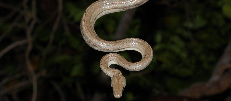 a silver snake