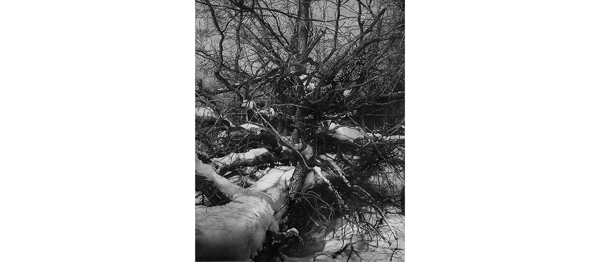intricate drawing of branch patterns of fallen trees