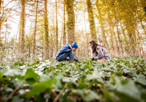 Two biology students working and taking notes in a field of leaves.