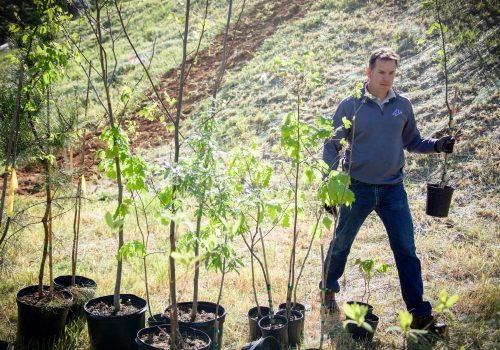 Staff member planting trees.